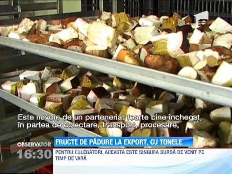 Zeci de tone de fructe de padure vor fi adunate in judetul Harghita