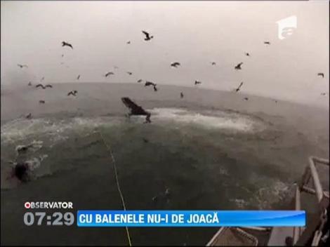 Doi scafandri au fost la un pas sa fie inghititi de balene