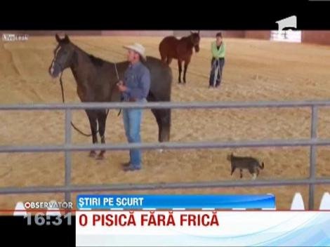 "VIRAL! O pisica curajoasa s-a luat la ""lupte"" cu un cal!"