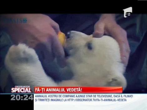 VIDEO! Un urs polar jucaus
