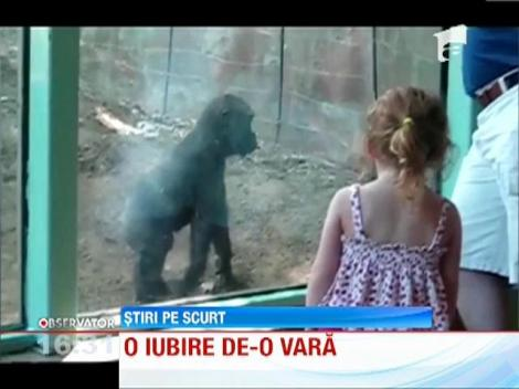 O iubire de-o vara! Un pui de gorila si o fetita au devenit cei mai buni prieteni