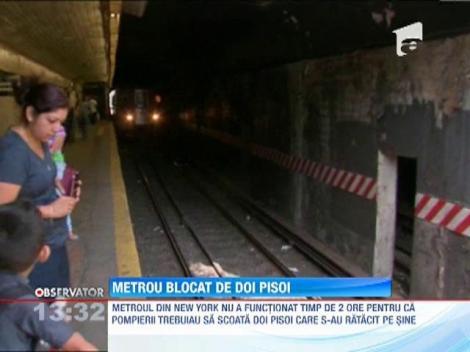 Metroul din New York, blocat de doi... pisoi
