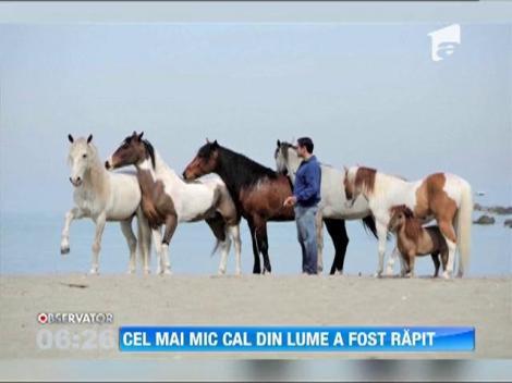 Cel mai mic cal din lume a fost furat