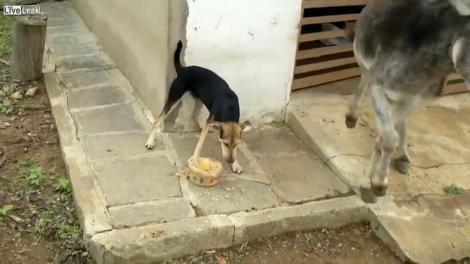 """VIDEO! Un caine, mai egoist decat """"prevede legea"""""""