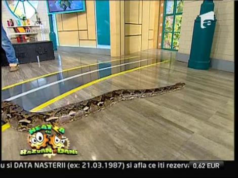 "Aligatori si serpi, in platoul de la ""Neatza cu Razvan si Dani"""