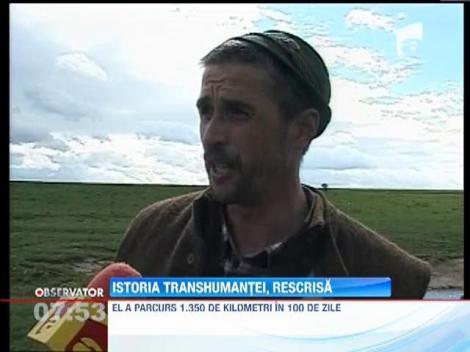 Transhumanta 2013: Un cioban din Brasov a strabatut 1.350 de kilometri cu turma sa de oi