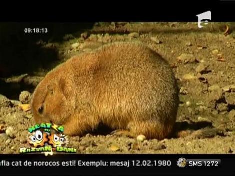 Neatza: Animalele de Gradina Zoologica Bucuresti pot fi urmarite LIVE, pe Internet