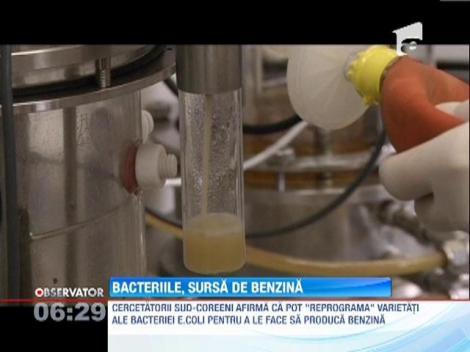 Combustibilul produs de bacterii, sursa de energie a viitorului