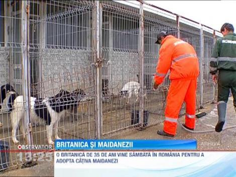 O britanica vrea sa salveze maidanezii din Romania