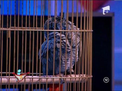 Ruţă, papagalul emisiunii, răspunde cum ştie mai bine mesajelor primite de la telespectatori