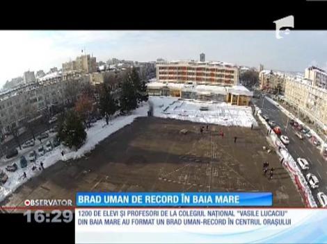 Cel mai mare brad uman din lume a prins viaţă în Baia Mare