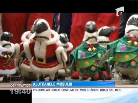 Pinguini costumaţi în Moş Crăciun