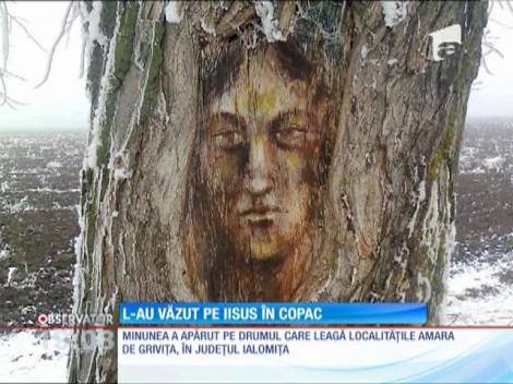 Pe trunchiul unui copac a apărut, ca prin minune, chipul lui Hristos