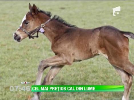 Cel mai preţios cal din lume