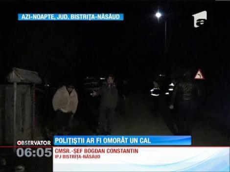 Membri unui echipaj de poliţie din Bistriţa-Năsăud sunt acuzaţi că ar fi provocat moartea unui cal
