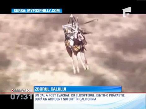 O femeie din SUA a căzut împreuna cu calul său într-o crevasă de 15 metri