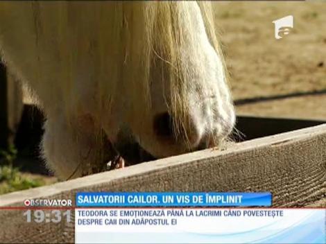 Şi-au dedicat viaţa îngrijirii cailor