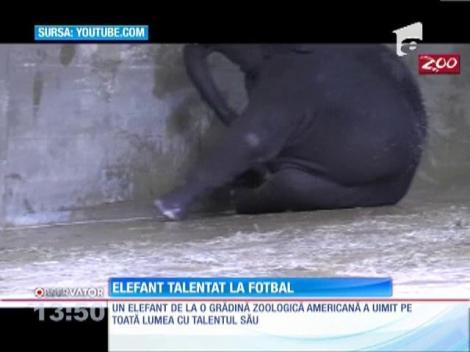 Elefant talentat la fotbal