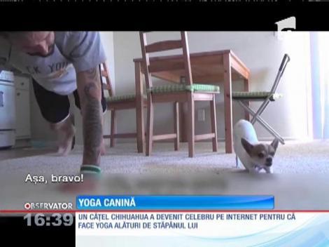 Un bărbat şi-a transformat câinele în cel mai bun elev la cursul de yoga