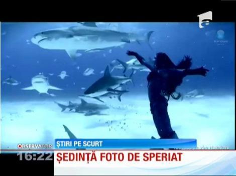 Şedinţă foto printre rechini