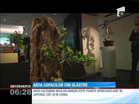 O colecţie impresionantă de bonsai aşteaptă un cumpărător cu 130.000 de dolari în buzunar