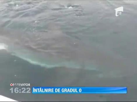 Un pescar a fost jefuit în larg, de un rechin