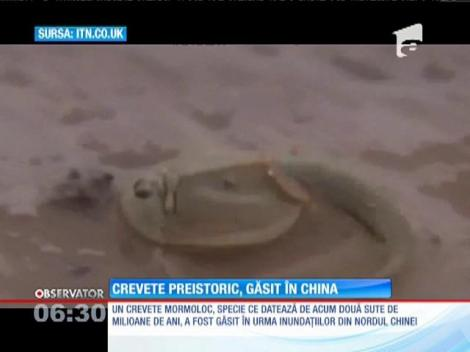 Un crevete preistoric a fost găsit în China