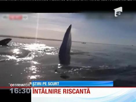 Întâlnire de gradul zero în cu un grup de balene