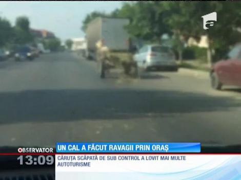 Un cal nărăvaş înhămat la o căruţă a lovit 14 maşini în Târgovişte