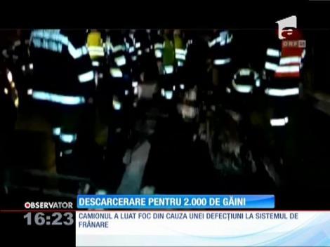 Descarcerare pentru 2.000 de găini aflate într-un camion în flăcări