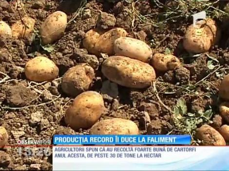 Producţia record la cartofi le aduce falimentul