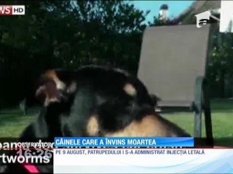 Câinele care a învins moartea