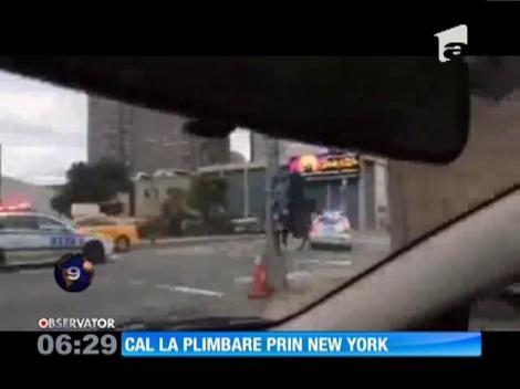 SUA: O maşină de poliţie a urmărit cu girofar şi sirenă un cal