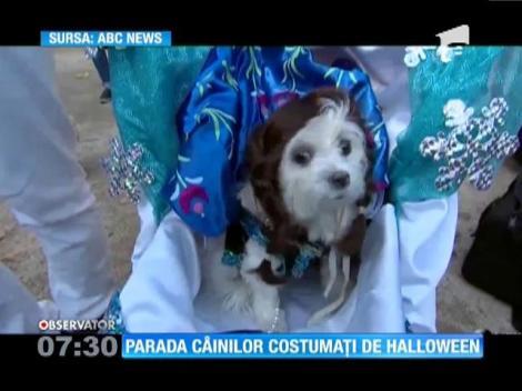 Parada costumelor de Halloween pentru câini