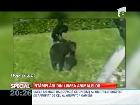 Special! Întâmplări din lumea animalelor