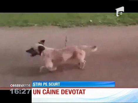 Câinele, cel mai bun prieten al unui brazilian