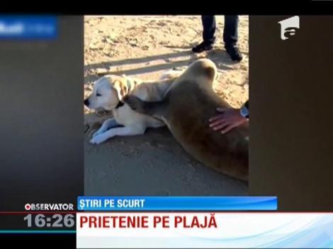 Prietenie între o focă și un câine
