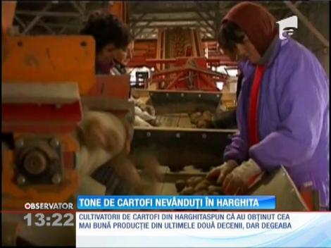 Tone de cartofi nevânduţi în Harghita