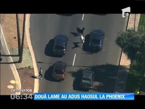 Doua lame au creat haos pe strazile din Phoenix