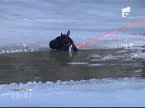 SUA: Un cal a fost salvat dintr-un lac înghețat