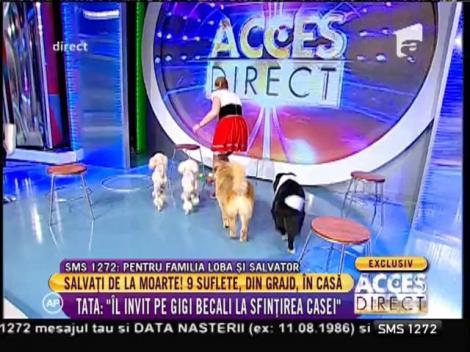 Moment de circ! Căţeluşii de la Globus, reprezentație în platoul de la Acces Direct!