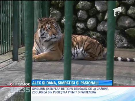Poveste de dragoste la grădina zoologică din Ploieşti