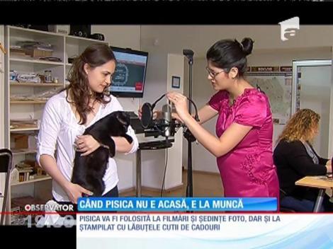 O companie care produce cadouri personalizate angajează o pisică!