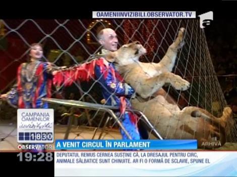 Remus Cernea vrea să scoată leii, elefanţii sau tigrii din spectacole de circ
