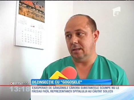 """Dezinsecție cu """"gogoșele"""" la Spitalul de Urgenţă din Piteşti"""