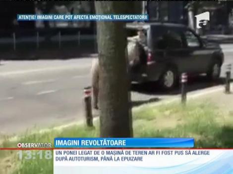 Un şofer din Baia Mare a legat un ponei de bara maşinii şi l-a târât prin oraş