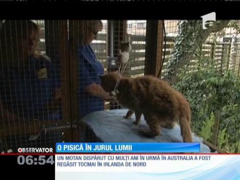 O pisică dispărută cu ani în urmă în Australia, găsită în Irlanda de Nord