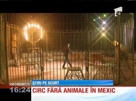 Circ fără animale în Mexic