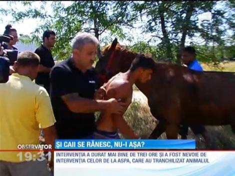 Un cal căzut într-un canal din cartierul bucureştean Militari, salvat de zeci de pompieri