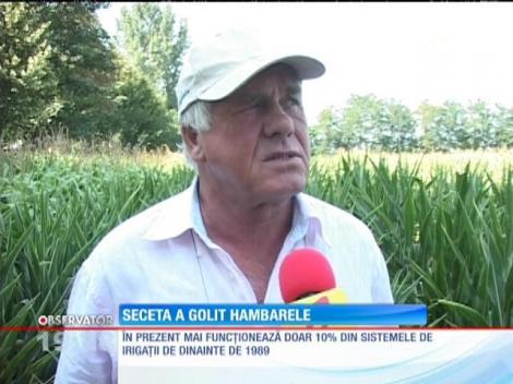 Seceta a pus agricultura românească la pământ